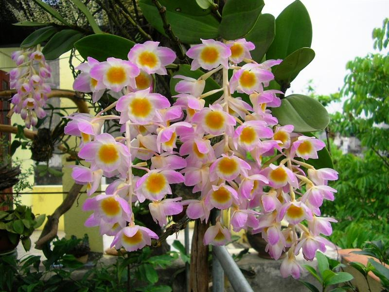 Classification Of Orchids Orchid Kingdom